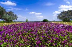 Пурпуровые петуньи Стоковые Фотографии RF
