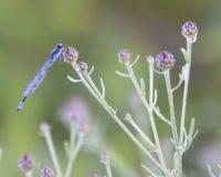 пурпуровые тени Стоковые Фото