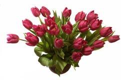 пурпуровые тюльпаны стоковое изображение rf