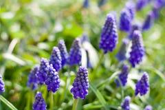 Пурпуровые цветки Стоковая Фотография RF