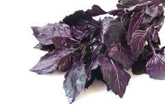 Пурпуровый базилик стоковые фото