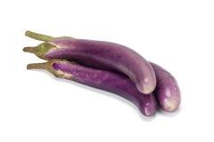 Пурпуровый баклажан стоковые изображения rf