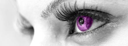 Пурпуровый глаз - красивейший, женственно стоковое фото rf
