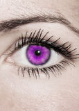 Пурпуровый глаз - красивейший, женственно стоковое изображение rf
