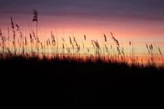 пурпуровый заход солнца Стоковые Изображения RF