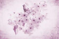 Пурпуровый зяблик Стоковое Фото
