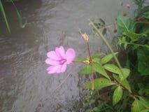 Пурпуровый одичалый цветок стоковое изображение rf