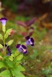 Пурпуровый цветок Стоковая Фотография