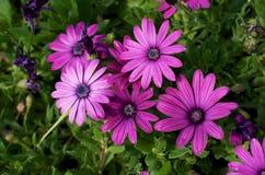 Пурпуровый цветок стоковое фото