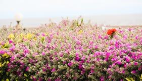 Пурпуровый цветок Стоковое фото RF