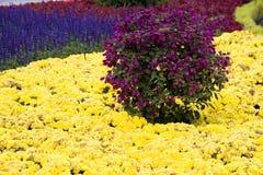 Пурпуровый bush   стоковые фотографии rf
