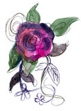 Пурпуровый Rose покрашенный в акварели Стоковые Фото