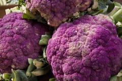 пурпур брокколи Стоковое Изображение RF