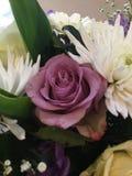 пурпур букета поднял стоковое изображение rf
