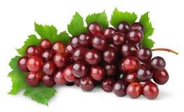 пурпур виноградины стоковое изображение rf