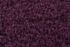 Пурпур выходит текстура Стоковые Фото