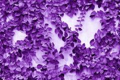 Пурпур выходит предпосылка стены Стоковое Изображение