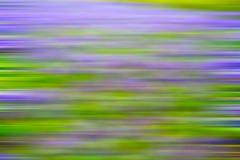 пурпур в природе и весне поля цветка желтого цвета Лондона Стоковые Изображения RF