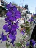 пурпур влюбленности Стоковые Фото