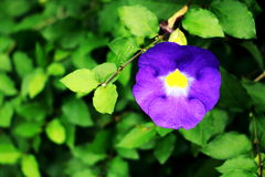 пурпур зеленого цвета цветка предпосылки Стоковое Изображение RF