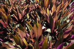 Пурпур и зеленая предпосылка куста стоковые изображения rf
