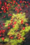 пурпур листьев зеленого цвета листва осени Стоковые Фотографии RF