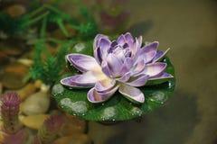 пурпур лотоса Стоковые Изображения