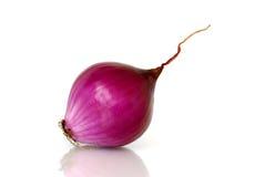 пурпур лука Стоковая Фотография