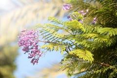 Пурпур на свете Стоковые Фото