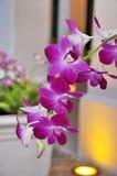 пурпур орхидеи стоковое изображение rf