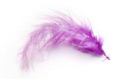 пурпур пера Стоковые Фото