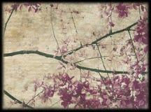 пурпур пинка цветения предпосылки Стоковое Фото