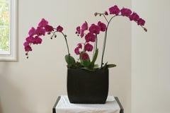 пурпур плантатора орхидеи цветка Стоковые Изображения