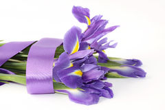 пурпур радужки Стоковое Изображение RF