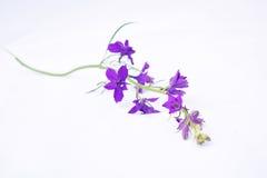 пурпур сада цветка стоковое изображение rf