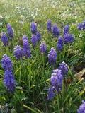 пурпур силы цветка стоковое фото rf