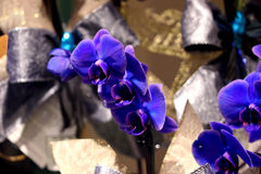 Пурпур фаленопсиса гибридный сизоватый стоковое фото rf