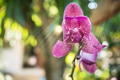 пурпур фото орхидеи макроса Стоковая Фотография RF
