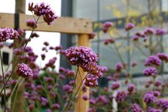 Пурпур цвета Стоковая Фотография