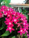 Пурпур цветет взгляд предпосылки стоковая фотография