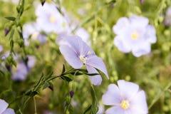 Пурпур цветка Буш Стоковое Изображение RF