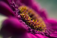 пурпур цветка детали Стоковые Фотографии RF