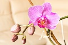 Пурпур цветка орхидеи Селективный фокус Схематический дизайн для gre Стоковая Фотография RF