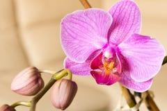 Пурпур цветка орхидеи Селективный фокус Схематический дизайн для gre Стоковые Изображения