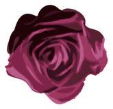 пурпур цветка поднял Стоковая Фотография