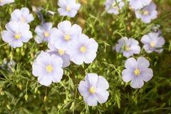 Пурпур цветка пятно Стоковые Изображения