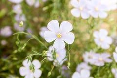 Пурпур цветка фото Стоковая Фотография RF