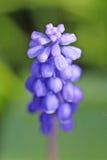 пурпур цветка стоковое изображение rf