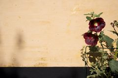 пурпур цветка Стоковые Изображения RF