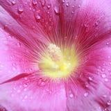 пурпур цветка Стоковые Изображения